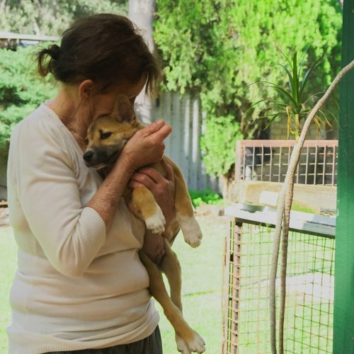 Respect at the Heart of Dingo Care